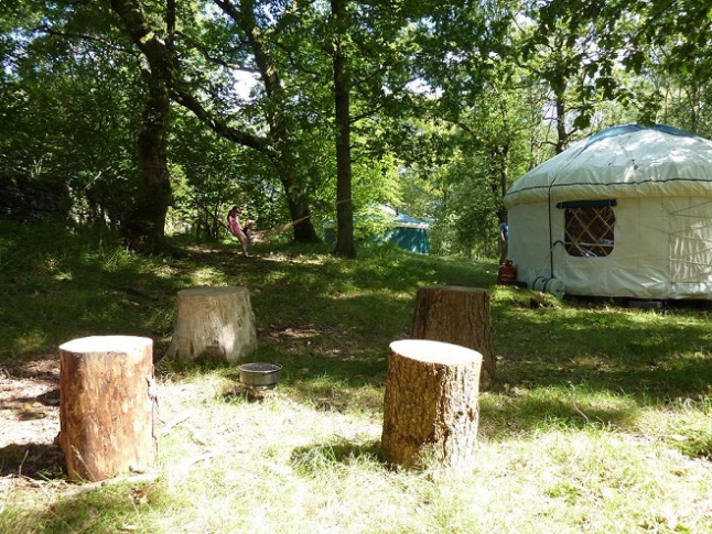 Yurts nestled in the woods at Wild in Style
